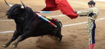 Un estudio demuestra que la información genética del toro de lidia es única
