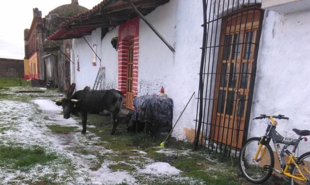 HISTORIA DE «AURORITA»  Vaca de La Trasquila