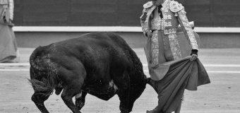 Víctor Barrio. La muerte fecunda de un torero.